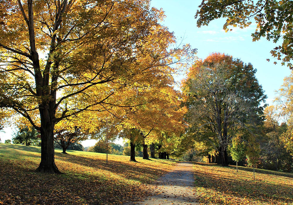 Caring for Maymont's Trees