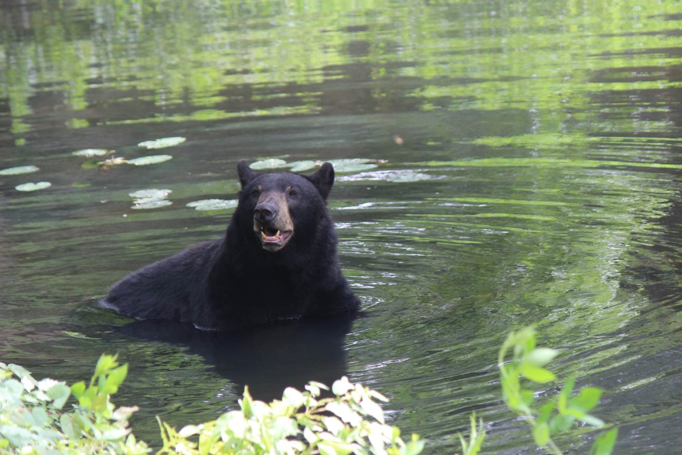 Wildlife Habitats at Maymont