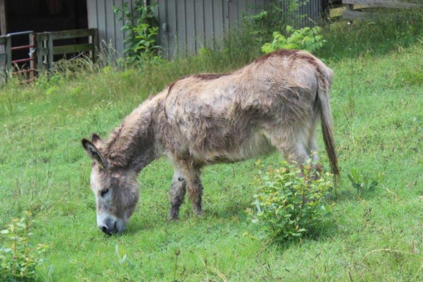 Banner Donkey