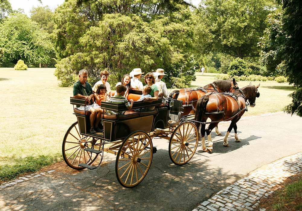 Button Carriage Ride