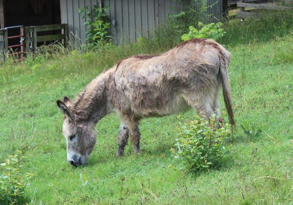 Donkey at Maymont Farm