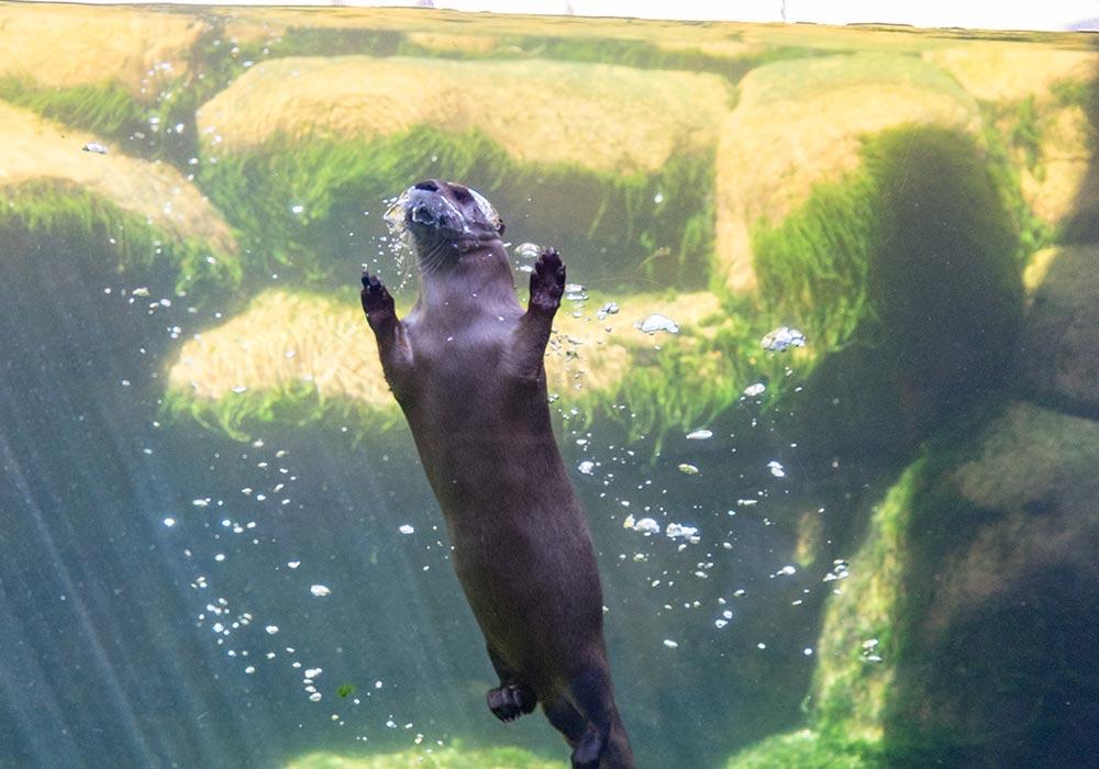 Button Otter RNC C Chris Johnson