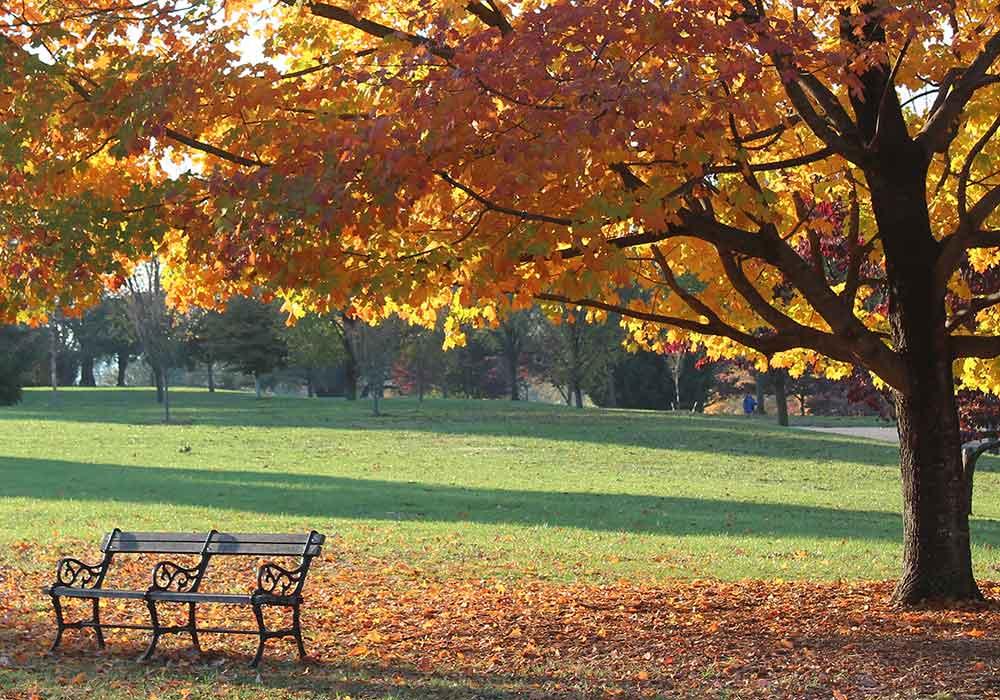 Button Memorial Bench Arboretum