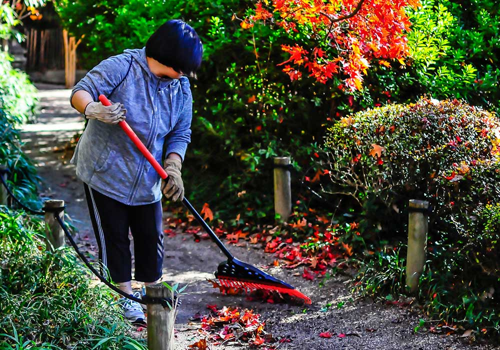 Button Raking Japanese Garden Volunteer