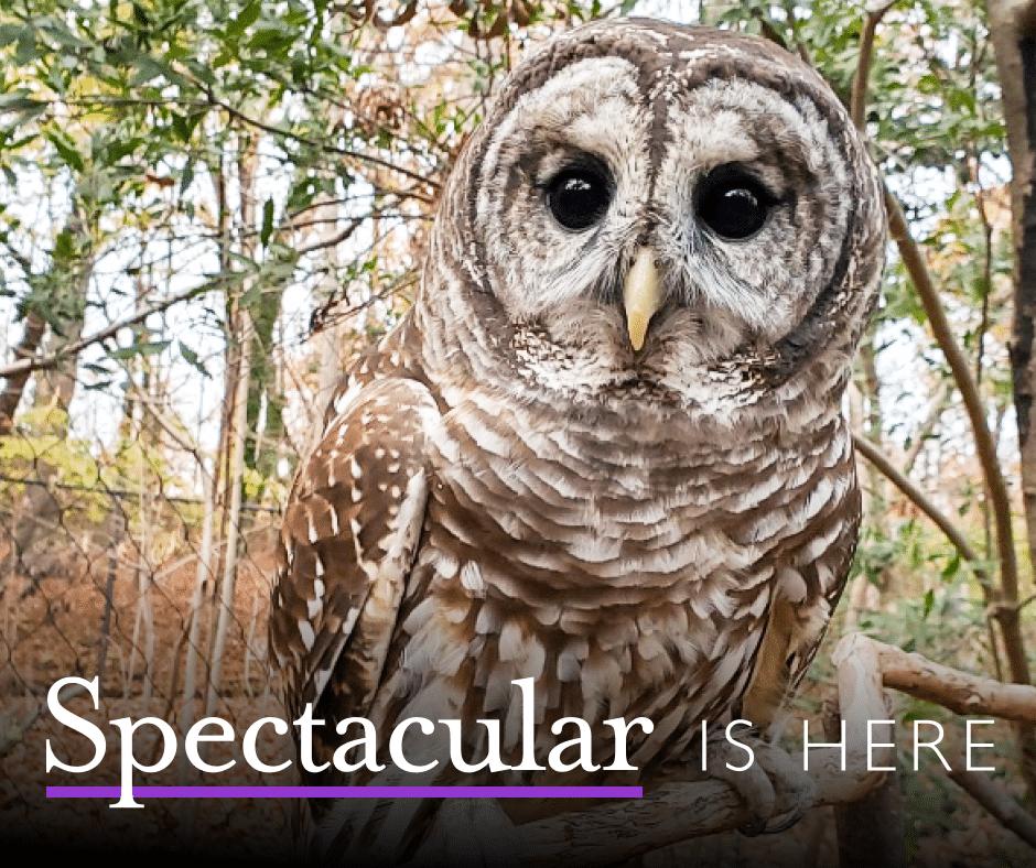 Spectacular Owl
