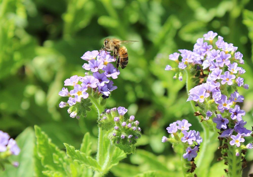 Bumblebee Jamboree at Maymont