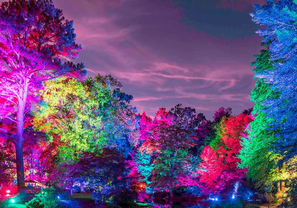 Button Garden Glow JG Illuminated
